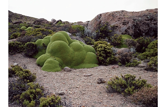 """The Oldest Living Things in the World"""
